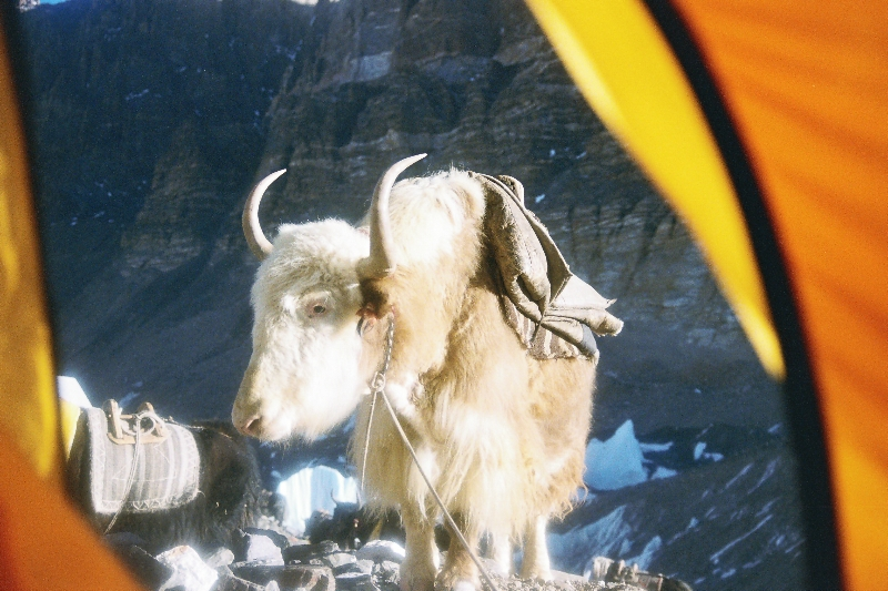 The Lost World of Tibet